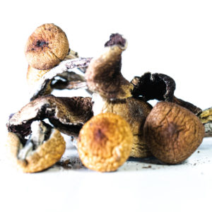 Buy Cambodian Magic Mushrooms Online