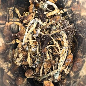 Buy Dried Whole Shrooms Online